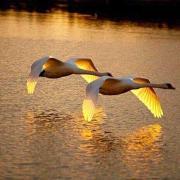 spiritueel medium Adora - beschikbaar